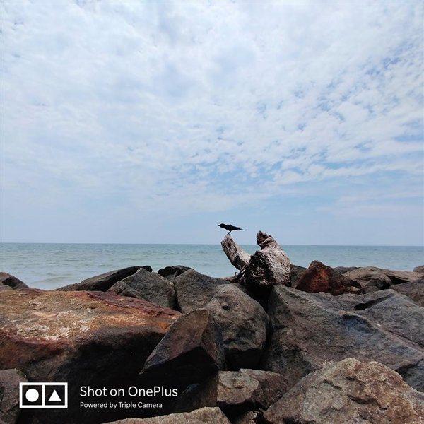 OnePlus 7 Pro - фото птицы издалека
