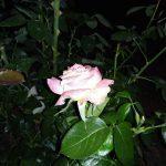 Redmi 7a - ночной снимок первая попутка