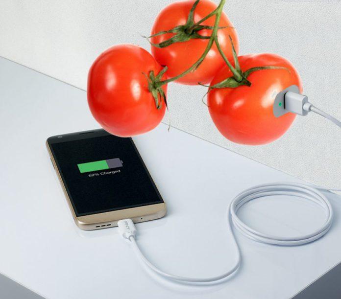 телефон заряжается от футболки созданной на основе помидорных шкурок
