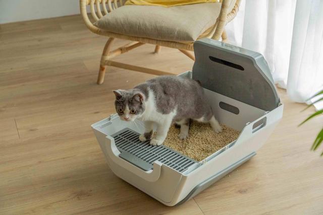 LuluPet AI Smart Cat Litter Box