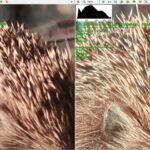 Снимок Redmi 9 справа